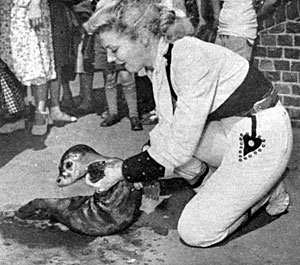 "Gail (""Annie Oakley"") Davis visited the London Zoo in 1953 and enjoyed playing  with a baby seal."
